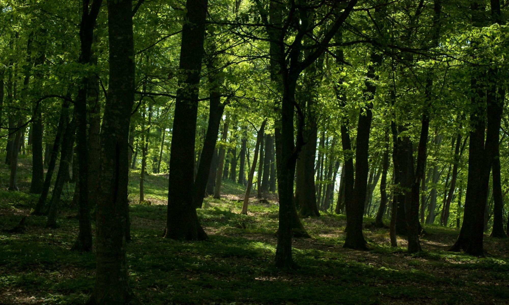 The Druid's Grove